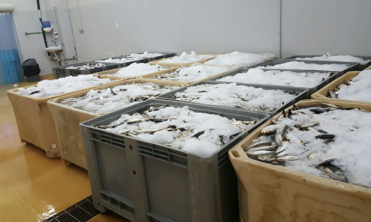 Cold Room and the National Fishery Logistic System